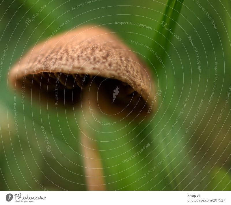Nature Green Summer Spring Brown Environment Growth Round Soft Wild Living thing Mushroom Poison Mushroom cap