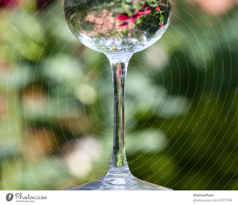 Roses in a glass Glass Style Decoration Flower Blossom Magnifying glass Flower vase Water Fragrance Glittering Thin Multicoloured Beautiful Esthetic Elegant