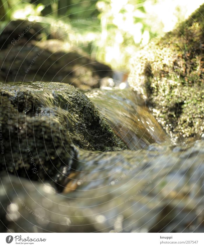 Nature Water Green Plant Summer Freedom Mountain Environment Grass Brown Rock Natural River Well-being Beautiful weather Moss