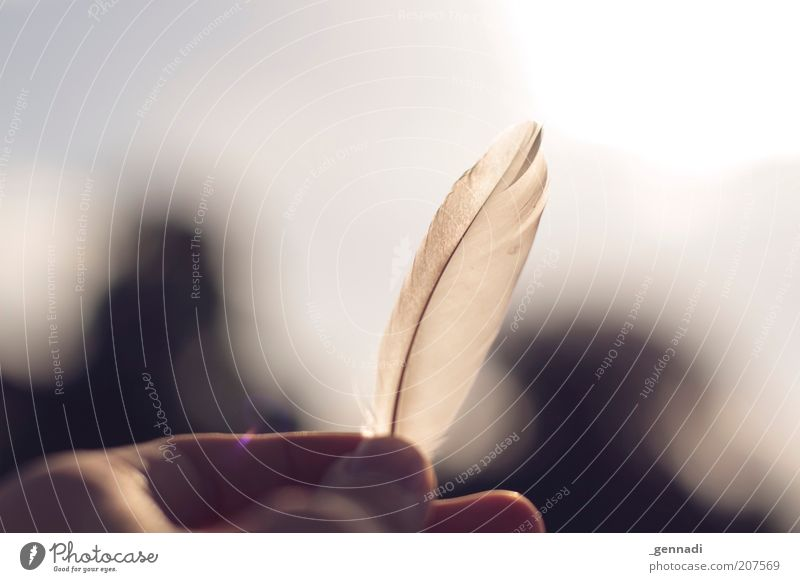 Hand Beautiful White Loneliness Happy Contentment Free Fingers Happiness Feather Longing Natural Wanderlust Memory Homesickness Human being