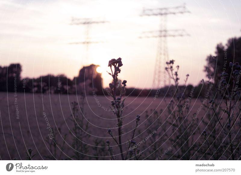 Nature Summer Calm Grass Happy Dream Warmth Landscape Contentment Field Weather Energy Horizon Esthetic Future Bushes