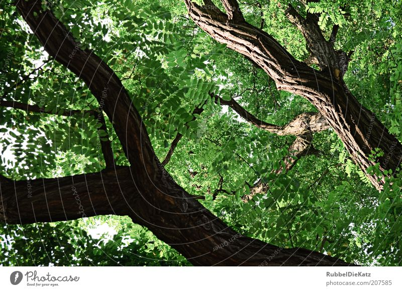 Nature Tree Green Plant Summer Forest Landscape Brown Environment Esthetic Tree trunk Deciduous tree Gigantic Leaf green Leaf canopy
