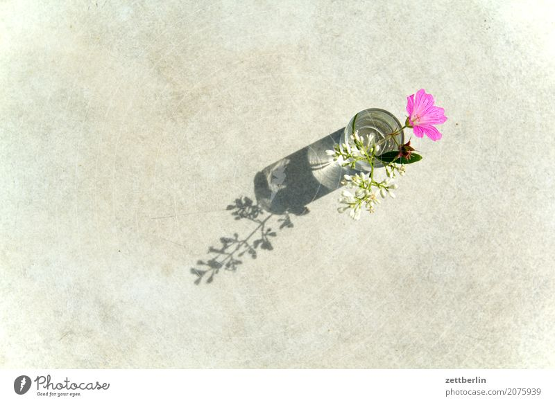 Nature Plant Summer Flower Calm Blossom Meadow Garden Copy Space Glass Blossoming Romance Lawn Tilt Twig Depth of field