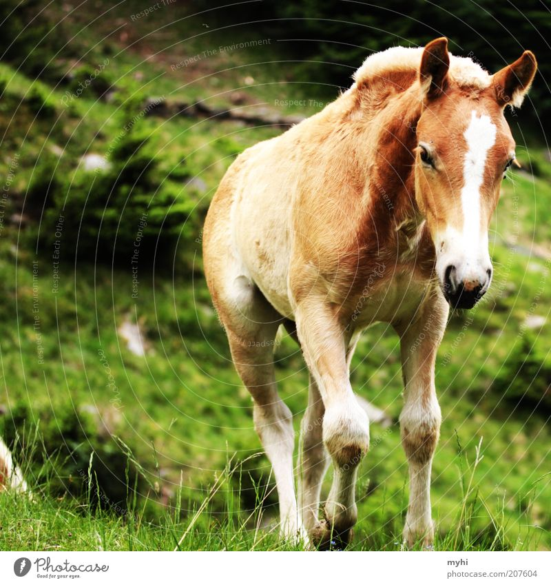 Nature Animal Grass Freedom Landscape Bright Brown Small Going Walking Horse Animal face Thin Natural Hill Curiosity
