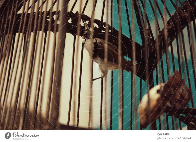 imprisoned Animal Wild animal Bird 1 Exceptional Exotic Beautiful Loneliness Fear Cage Deprivation of liberty Retro Colours Vintage Colour photo Exterior shot