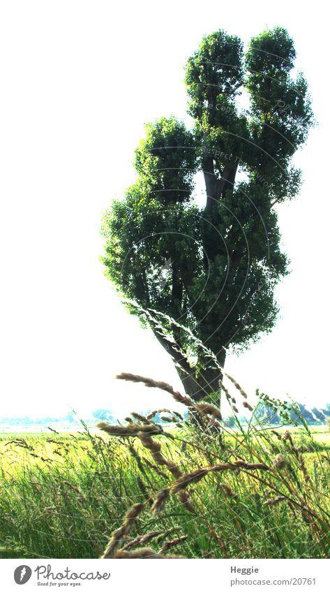 tree Tree Green Grass Wide angle Pasture