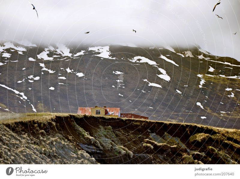 Nature Sky House (Residential Structure) Clouds Animal Mountain Building Landscape Moody Bird Environment Flying Group of animals Manmade structures Iceland