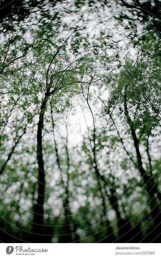 delirium Environment Nature Landscape Plant Sky Tree Movement Rotate Bizarre Surrealism Colour photo Exterior shot Light Shadow Blur Forest Motion blur