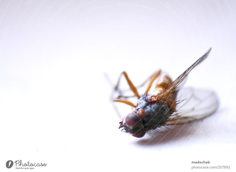 Death Lie Fly Gloomy Wing Transience Symbols and metaphors Insect Bizarre Macro (Extreme close-up) Dead animal