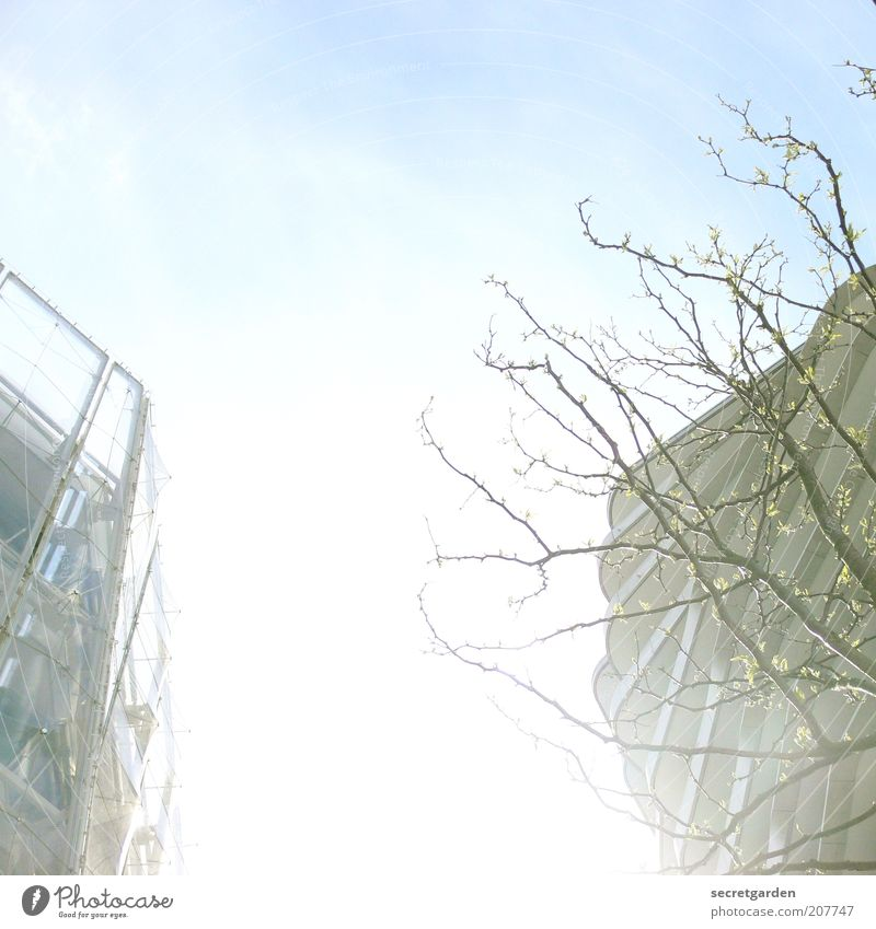 Blue White Tree Plant House (Residential Structure) Environment Architecture Spring Building Bright Facade High-rise Modern Esthetic Construction site