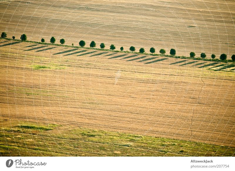 Tree Summer Landscape Brown Field Esthetic Simple Footpath Agriculture Avenue Aerial photograph Bird's-eye view Row of trees