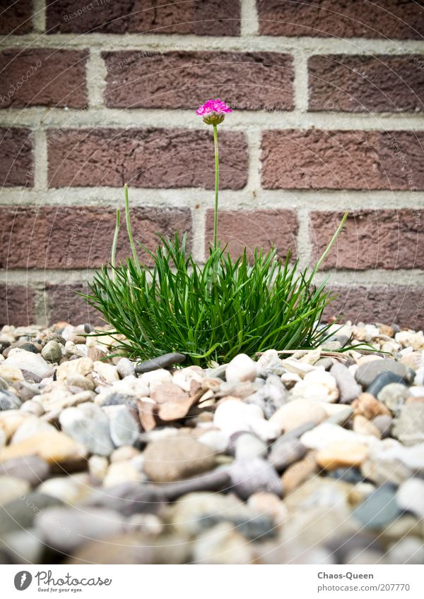 Nature Beautiful Flower Green Plant Red Summer Colour Life Wall (building) Blossom Garden Stone Wall (barrier) Brown