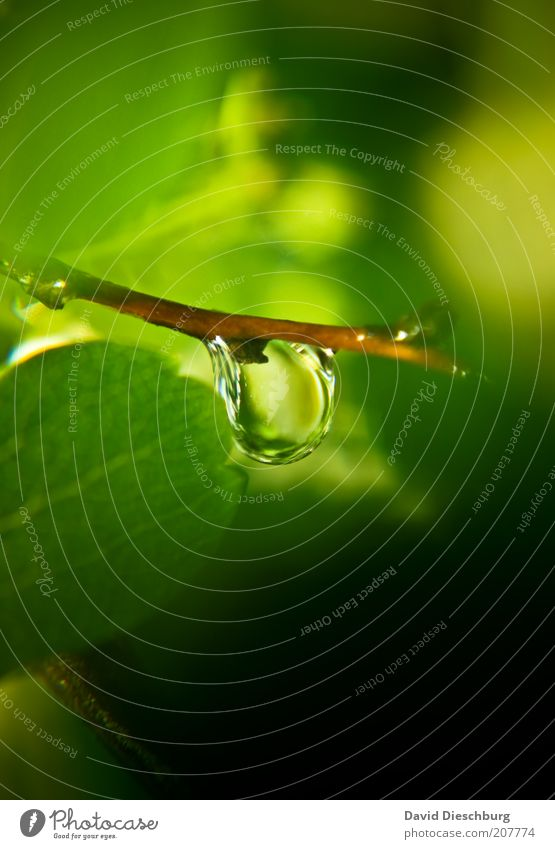 12 days rain Life Plant Water Drops of water Spring Summer Leaf Foliage plant Green Wet Damp Round Colour photo Exterior shot Close-up Detail