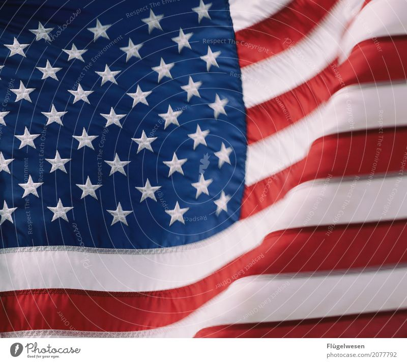 Wind USA Americas Flag Cloth American Flag Blow Flagpole Nationalities and ethnicity Patriotism President