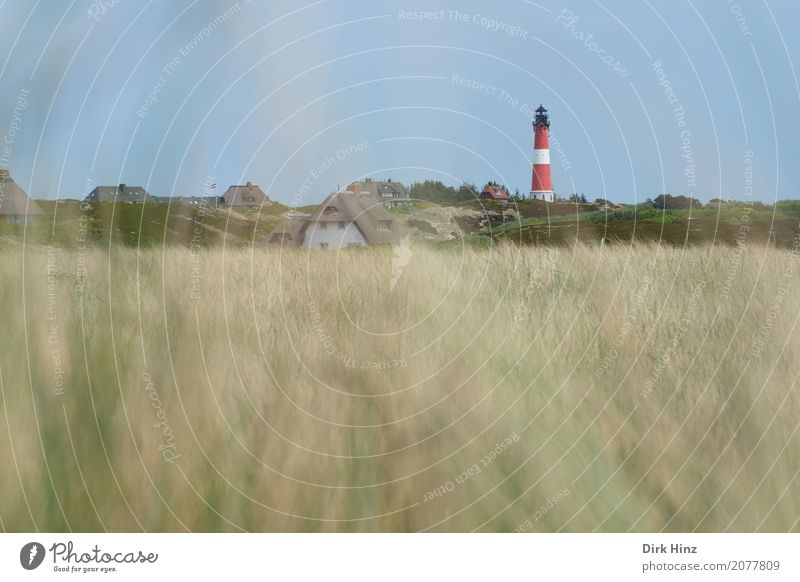 Lighthouse in Hörnum on the island of Sylt Vacation & Travel Tourism Trip Far-off places Freedom Ocean Island Nature Plant Wild plant Coast North Sea Maritime