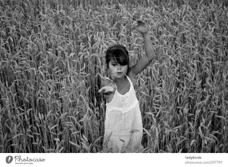 Girl in the cornfield Playing Summer Parenting Child Human being Infancy Life Face Arm 1 3 - 8 years Dance Environment Nature Climate change Agricultural crop