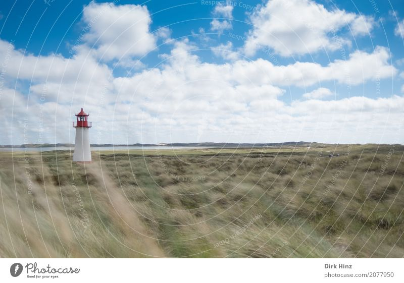 Lighthouse in List on Sylt Vacation & Travel Tourism Far-off places Freedom Summer Summer vacation Ocean Island Nature Plant Wild plant Coast North Sea Maritime