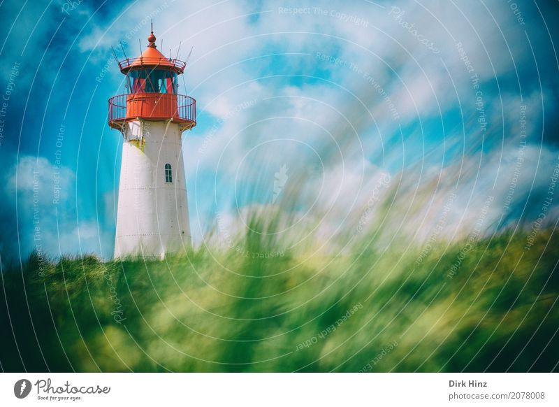 Lighthouse in List on Sylt Vacation & Travel Trip Far-off places Freedom Beach Ocean Island Nature Beautiful weather Plant Grass Wild plant Coast North Sea Blue
