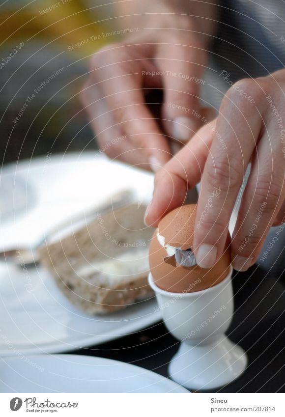 Breakfast is ready. Roll Egg Nutrition Eating Plate Knives Spoon Hand Fingers 1 Human being Delicious Round Calm Appetite Colour photo Exterior shot Morning