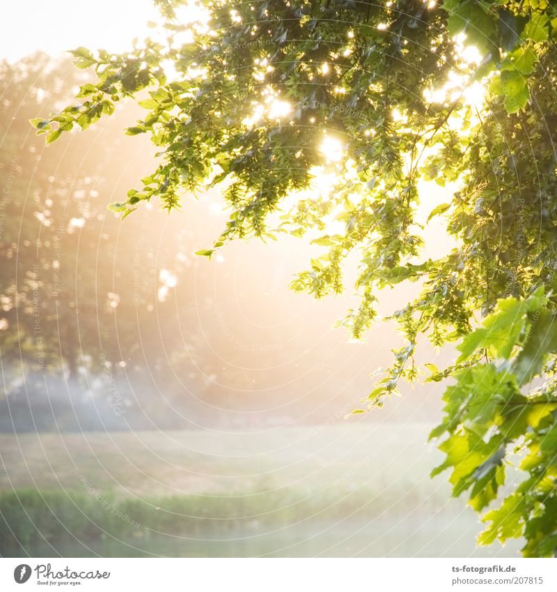 Nature Tree Green Plant Leaf Meadow Happy Landscape Contentment Fog Weather Environment Growth Bushes Sunbeam Natural