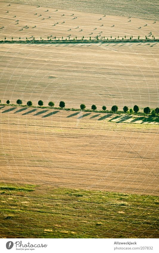 Nature Tree Summer Far-off places Field Earth Arrangement Esthetic Natural Border Row Harvest Footpath Beautiful weather Hay Boundary