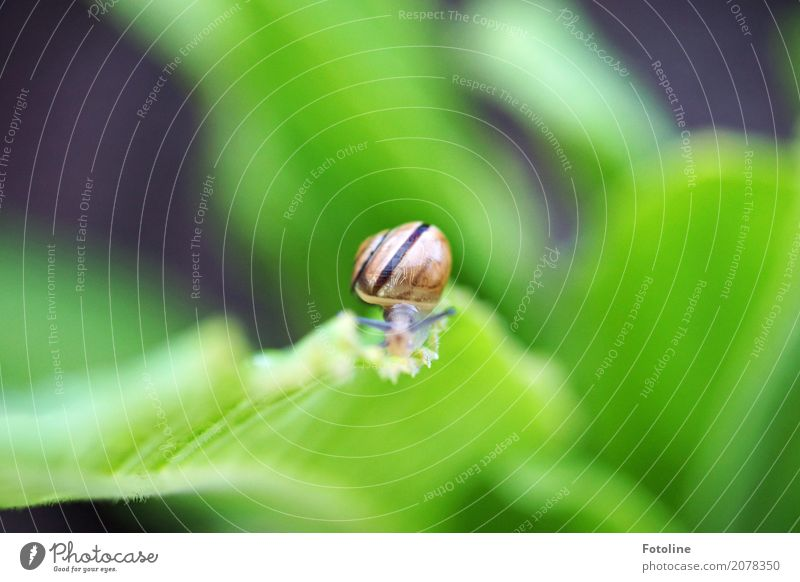 Nature Plant Green Leaf Animal Environment Natural Small Garden Brown Bright Park Free Stripe Near Snail