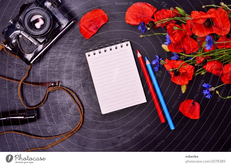 notepad and vintage film camera Tourism Camera Plant Flower Leaf Blossom Paper Pen Bouquet Wood Blossoming Natural Blue Green Red Black Colour Notebook Pencil