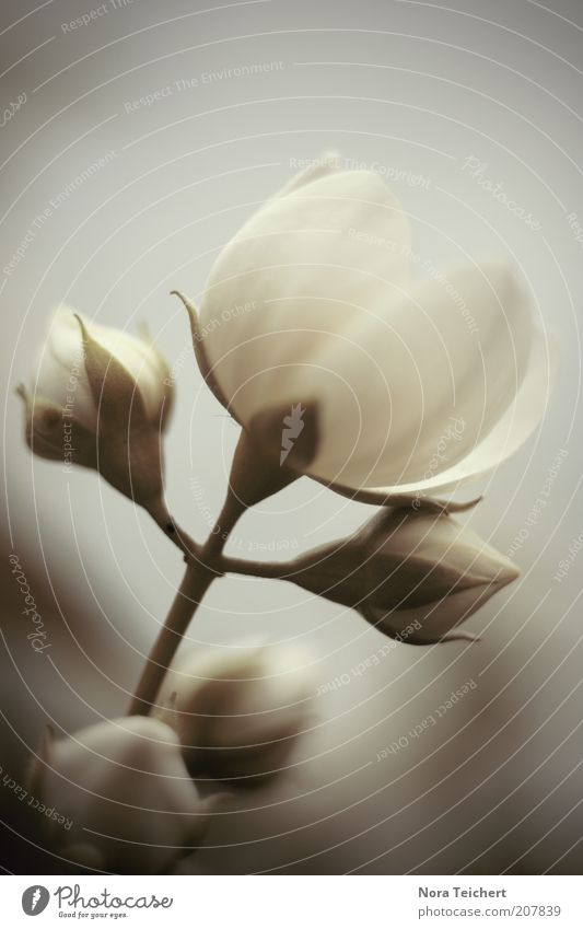 Nature Beautiful White Flower Plant Summer Blossom Spring Moody Environment Esthetic Growth Climate Blossoming Illuminate Fragrance