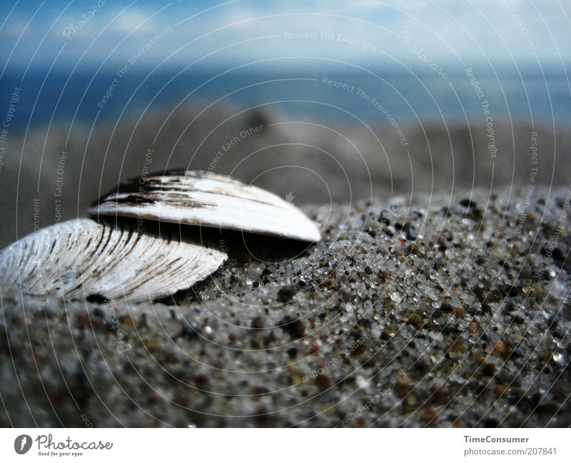 """Let's go to the beach together!"" Summer Summer vacation Beach Ocean Sand Beautiful Safety Protection Mussel Grain of sand Colour photo Subdued colour"