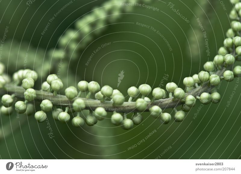 molecule Environment Nature Plant Summer Foliage plant Green Colour photo Subdued colour Exterior shot Close-up Macro (Extreme close-up) Deserted Day Sunlight