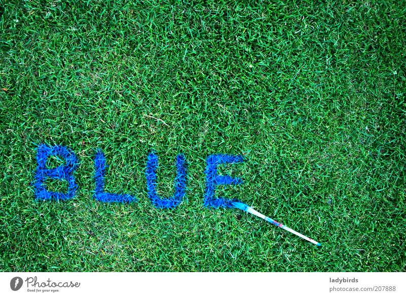 blue or green? Nature Grass Foliage plant Sign Characters Blue Green Design Creativity Art Paintbrush Brush handle Painting (action, artwork) Draw Brush stroke