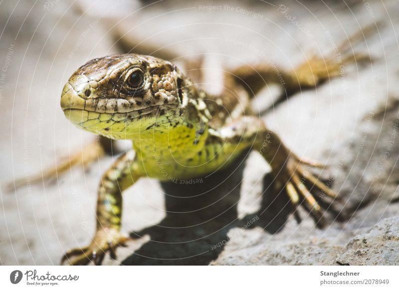 Nature Summer Animal Rock Esthetic Wild animal Adventure Observe Hide Animal face Pride Experience Saurians Lizards