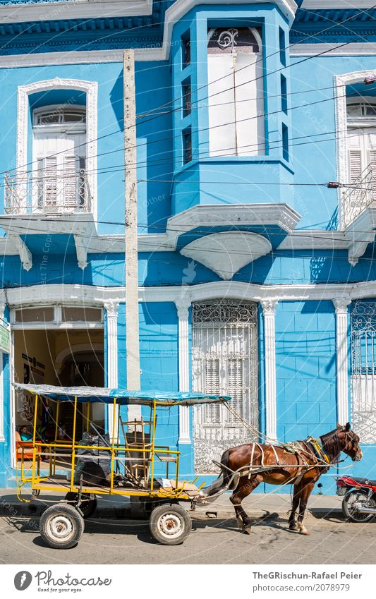 Blue House Village Small Town Brown Yellow Red Horse Horse-drawn carriage Cuba Vintage car House (Residential Structure) Window Carriage Front door Wait Break