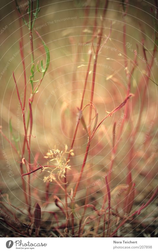 Nature Beautiful Flower Plant Red Grass Earth Environment Esthetic Bushes Authentic Climate Mysterious Blossoming Surrealism