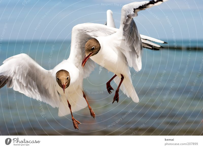 Nature Sky White Ocean Summer Animal Warmth Bird Coast Environment Flying Animal face Climate Wing Wild animal Argument