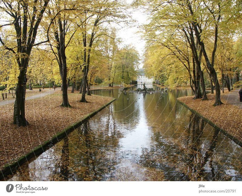 Water Tree Autumn Park