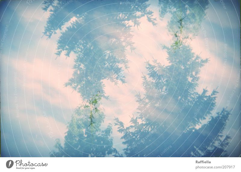 the trees are moving Summer Nature Sky Clouds Sunlight Tree Calm Fir tree Blue Blue-green Double exposure Vignetting Holga Colour photo Exterior shot Lomography