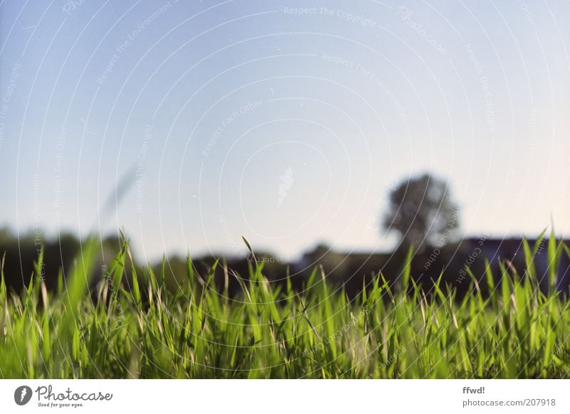 meadow Environment Nature Sky Cloudless sky Grass Meadow Growth Fresh Natural Juicy Calm Idyll Flourish Colour photo Exterior shot Copy Space top Day Light