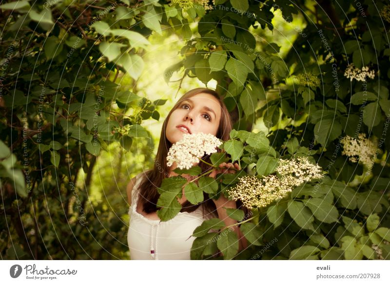 garden dreaming Human being Feminine Young woman Youth (Young adults) Woman Adults 1 18 - 30 years Nature Spring Summer Plant Bushes Blossom Elderflower Garden
