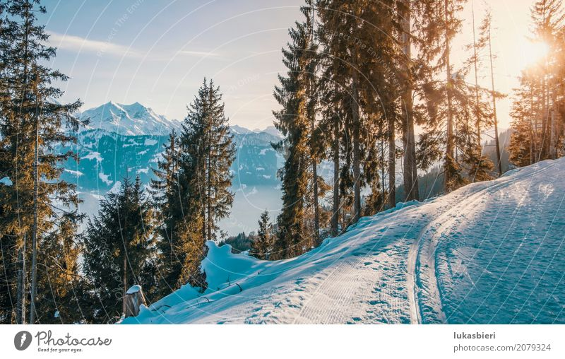 Winter landscape with a view of the Alps in the evening light Environment Nature Landscape Plant Sky Sunrise Sunset Sunlight Beautiful weather Ice Frost Snow