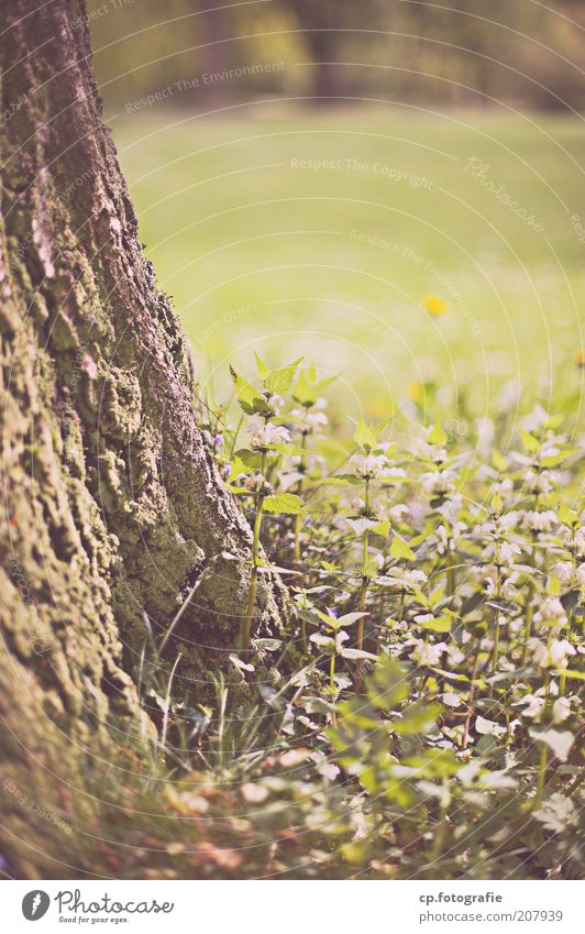 Nature Tree Plant Summer Relaxation Meadow Grass Spring Garden Park Natural Tree trunk Tree bark