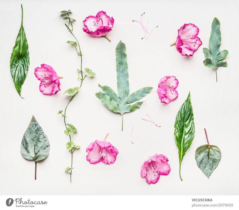 Nature Plant Summer Green White Flower Leaf Lifestyle Blossom Spring Love Style Design Pink Decoration Retro