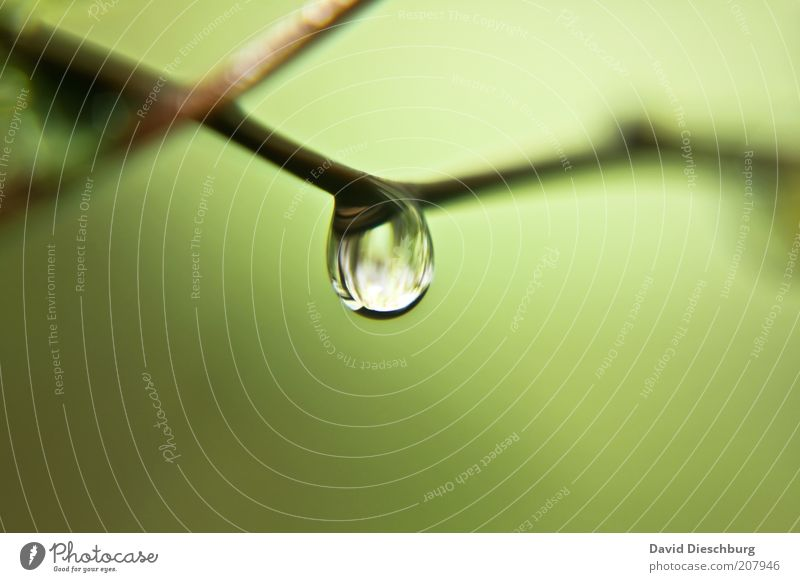 Nature Green Summer Life Spring Fresh Drops of water Individual Wet Drop Clarity Twig Dew Damp Water Water reflection