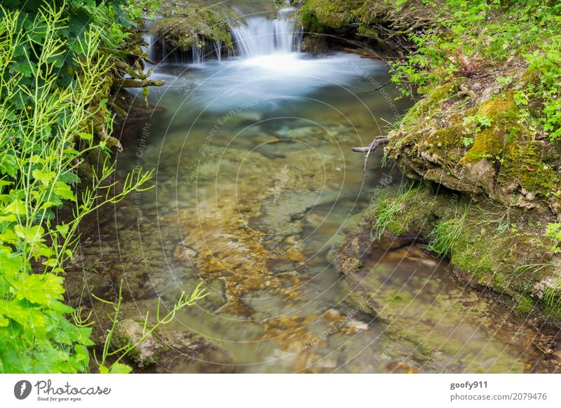 Mini Waterfall Trip Adventure Summer Hiking Environment Nature Landscape Plant Animal Earth Spring Grass Bushes Brook River Stone Blossoming Discover Fluid