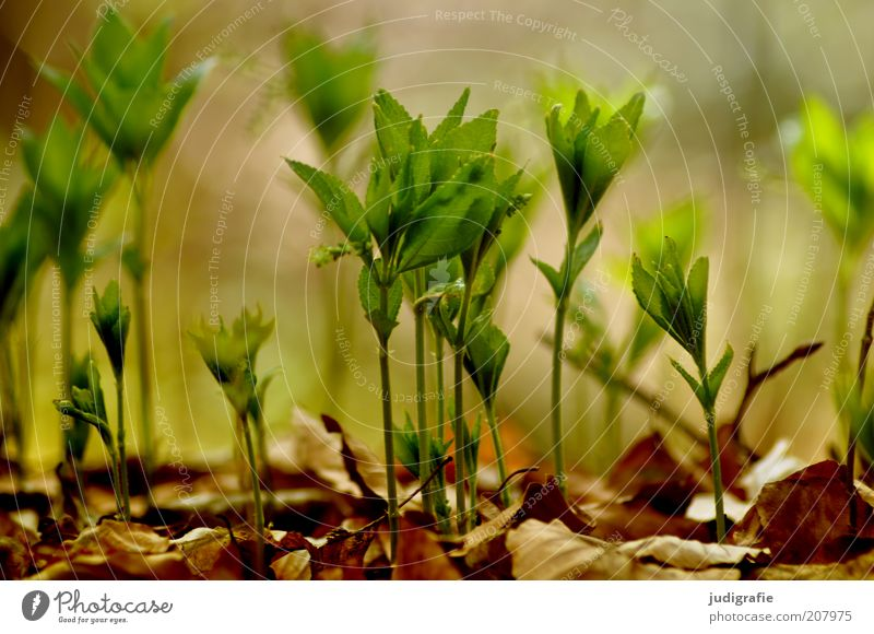 wax Environment Nature Plant Earth Spring Leaf Foliage plant Wild plant Growth Natural Life Colour photo Exterior shot Day Blur Plantlet Small Graceful Green