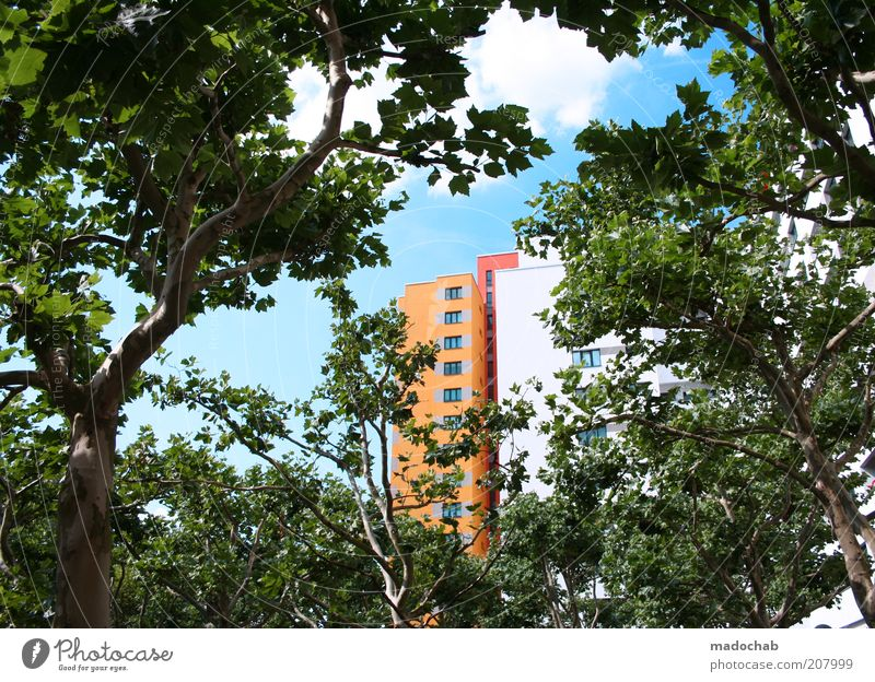 Nature Tree City Leaf House (Residential Structure) Colour Style Building Landscape Architecture Environment High-rise Facade Esthetic Living or residing Branch