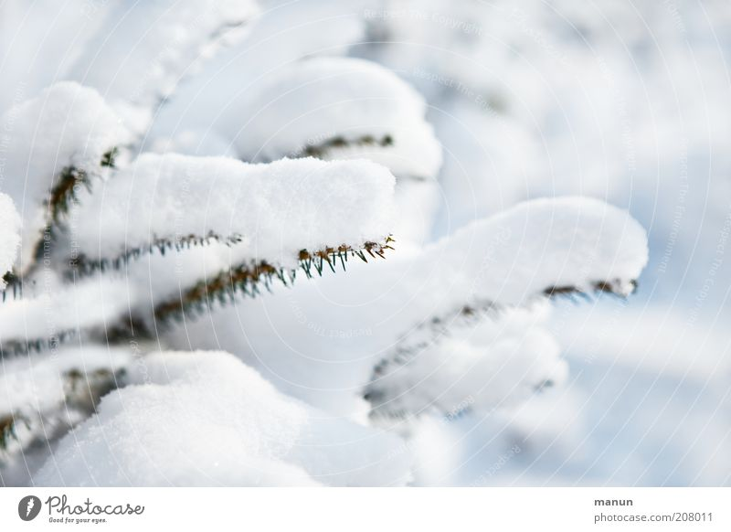 snow white Nature Winter Ice Frost Snow Tree Coniferous trees Fir tree Fir branch Fir needle Spruce Bright Cold White Colour photo Exterior shot Deserted