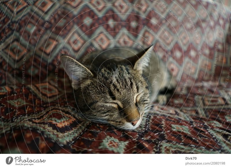 Cat's life! Living or residing Flat (apartment) Sofa Living room Blanket day cover Favorite place Animal Pet Domestic cat Tabby cat tabby European Shorthair 1