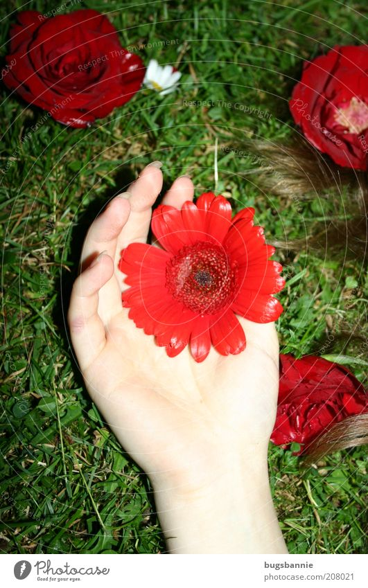 Nature Hand Green Plant Red Flower Colour Feminine Emotions Grass Blossom Hair and hairstyles Dream Elegant Lie
