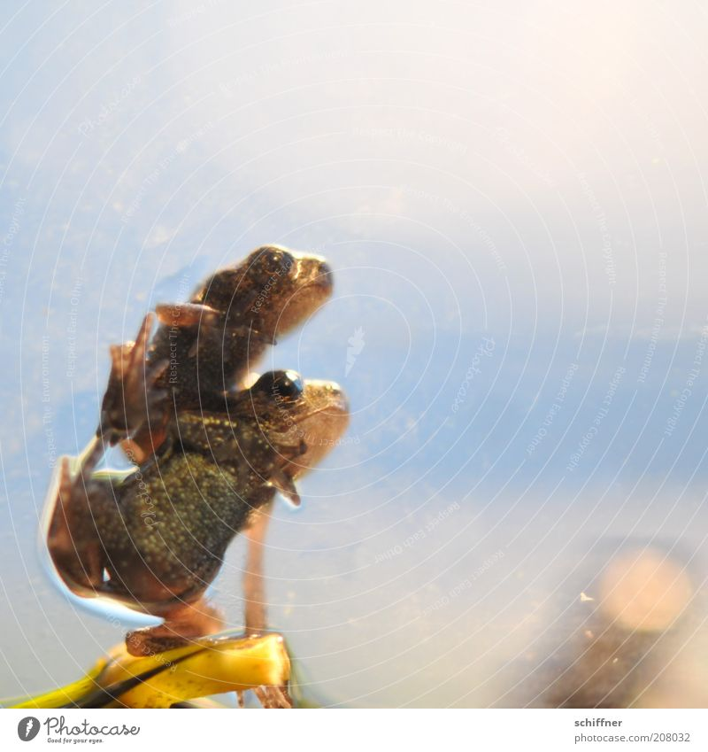 Nature Animal Together Pair of animals Small Sit Natural To hold on Frog Attachment Twig Crouch Vice Macro (Extreme close-up) Error Baby animal